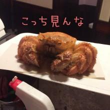 蒸された毛ガニ